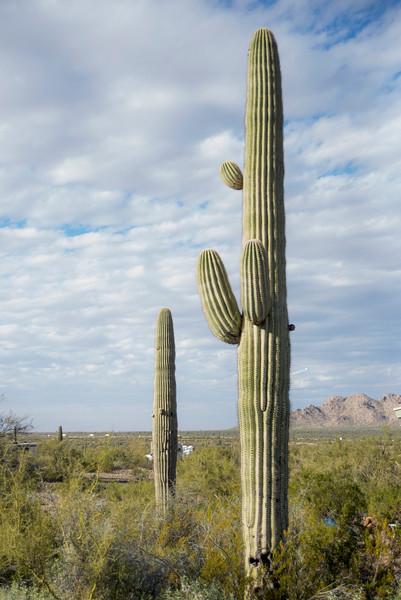 1009_Tucson_Saguaro_Gilbert_Ray