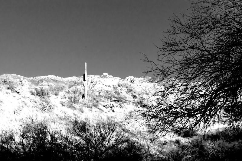 1032_Tucson_Saguaro_Gilbert_Ray