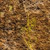 1131_New_Mexico_City_of_Rocks