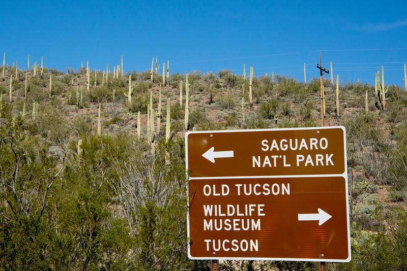 1058_Tucson_Saguaro_Gilbert_Ray
