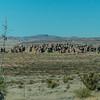 1106_New_Mexico_City_of_Rocks