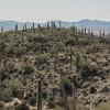 1069_Tucson_Saguaro_Gilbert_Ray
