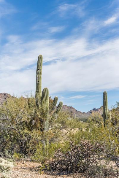 1050_Tucson_Saguaro_Gilbert_Ray