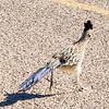 1040_Tucson_Saguaro_Gilbert_Ray