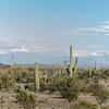 1011_Tucson_Saguaro_Gilbert_Ray