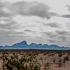 1006_Tucson_Saguaro_Gilbert_Ray