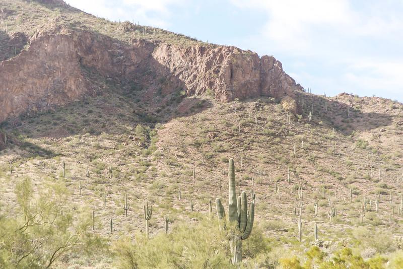 1012_Tucson_Saguaro_Gilbert_Ray