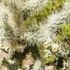 1044_Tucson_Saguaro_Gilbert_Ray