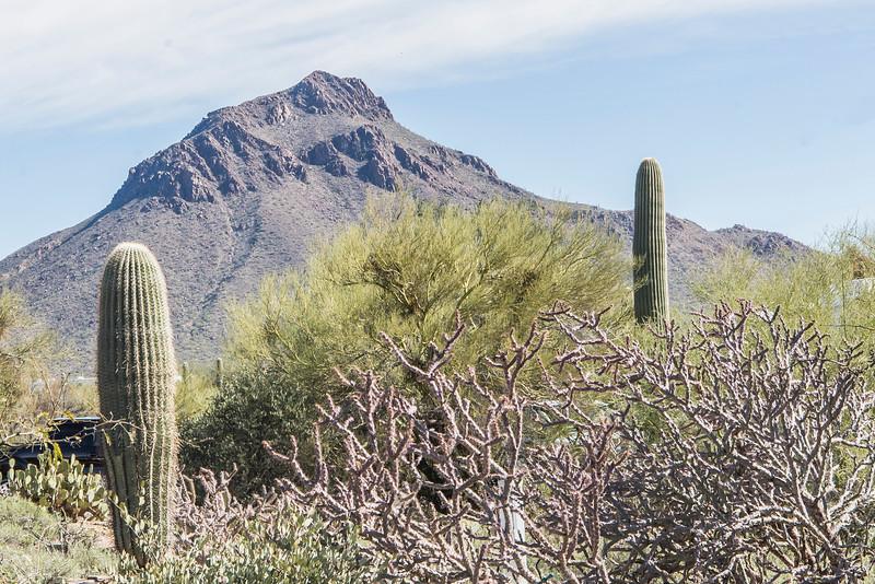 1049_Tucson_Saguaro_Gilbert_Ray