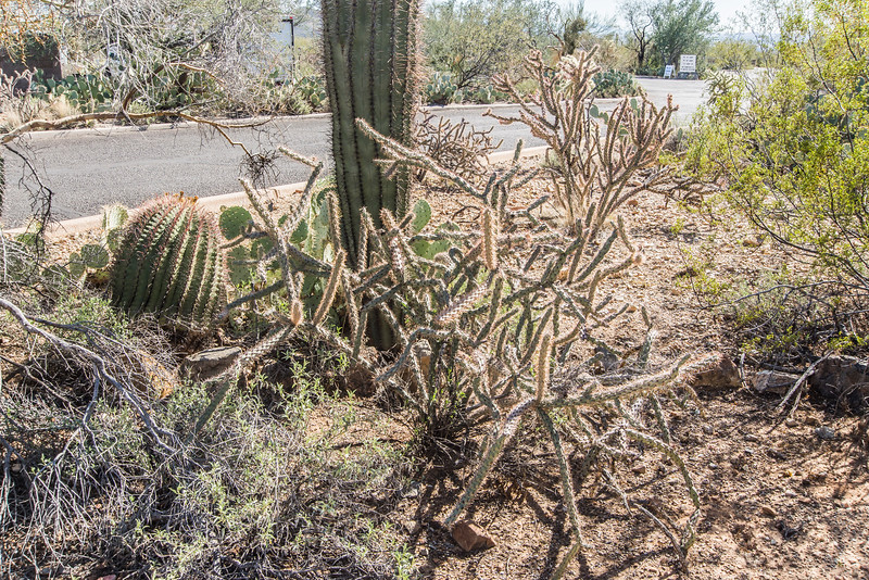 1046_Tucson_Saguaro_Gilbert_Ray