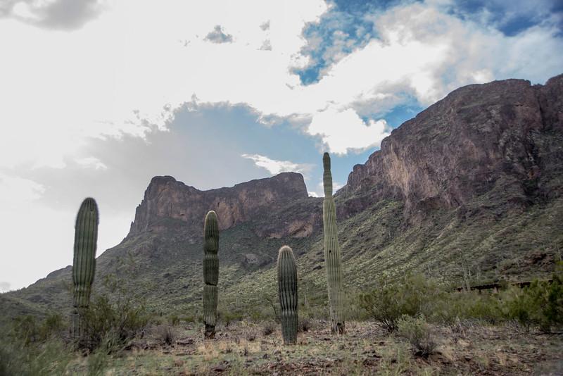 1018_Tucson_Saguaro_Gilbert_Ray