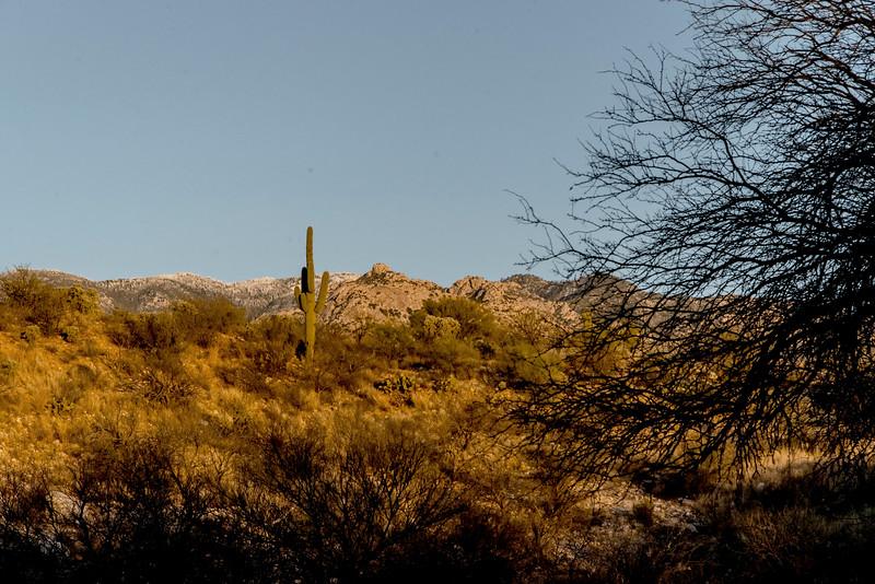 1031_Tucson_Saguaro_Gilbert_Ray