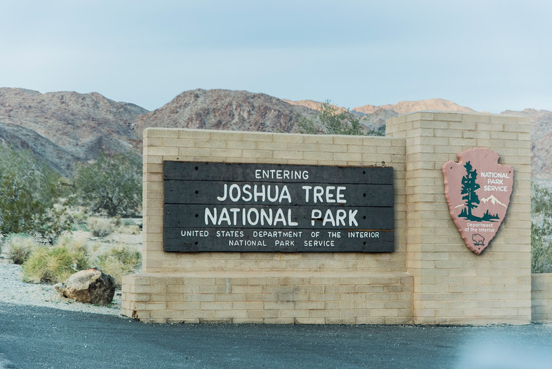 907_Joshua_Tree_Cottonwood