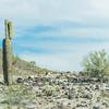 1005_Tucson_Saguaro_Gilbert_Ray