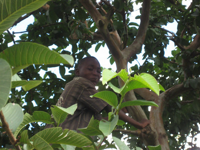 D5 Boy in guava tree
