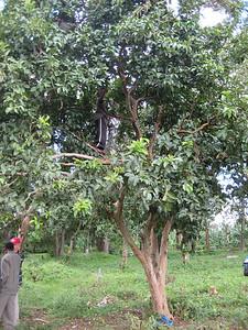 D5 Boy in tree