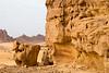 Nearby Elephant Rock
