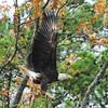 Eagle 4259a