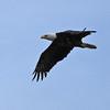 Eagle4172