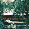 Covered Bridge Gift Shop - Rikard's Mill - Monroe County, AL  9-30-95