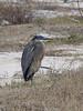 bird in beachgrass