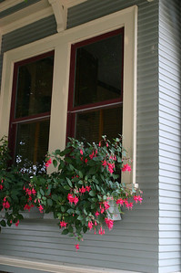 I loved the pink fuschias dangling from the front windowbox of the teal-blue Spite House, but it was hard to get a good angle.