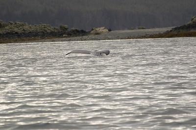 Juneau whale tale
