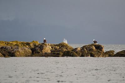 Juneau eagle island