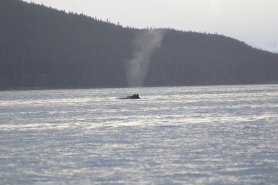 Juneau whale breathing hole
