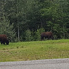 Alaska_CP_1July16_012