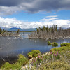 Alaska_CP_2July16_031