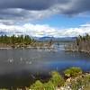 Alaska_CP_2July16_034
