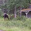 Alaska_CP_5July16_001