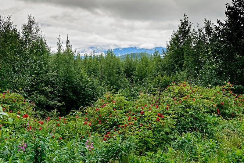 Alaska_7July16_054_e