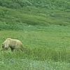Alaska_CP_13July16_047