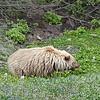 Alaska_CP_13July16_046
