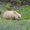 Alaska_CP_13July16_044