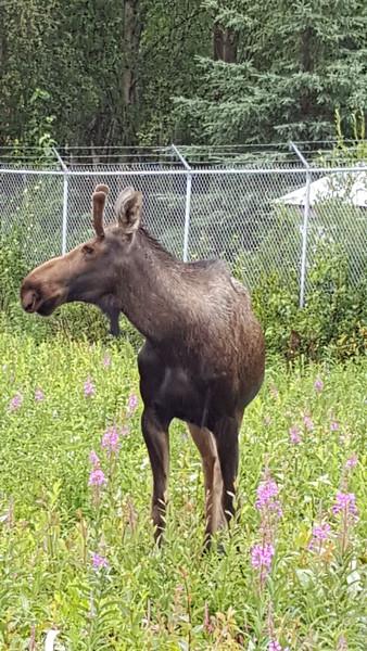 Alaska_CP_25June16_016