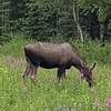 Alaska_CP_25June16_006