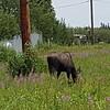 Alaska_CP_25June16_002