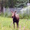 Alaska_CP_25June16_013