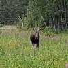 Alaska_CP_25June16_004