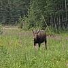 Alaska_CP_25June16_003