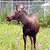 Alaska_CP_25June16_017
