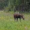 Alaska_CP_25June16_005