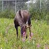 Alaska_CP_25June16_025