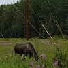 Alaska_CP_25June16_021