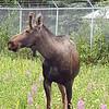 Alaska_CP_25June16_014