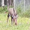Alaska_CP_25June16_011
