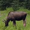 Alaska_CP_25June16_023
